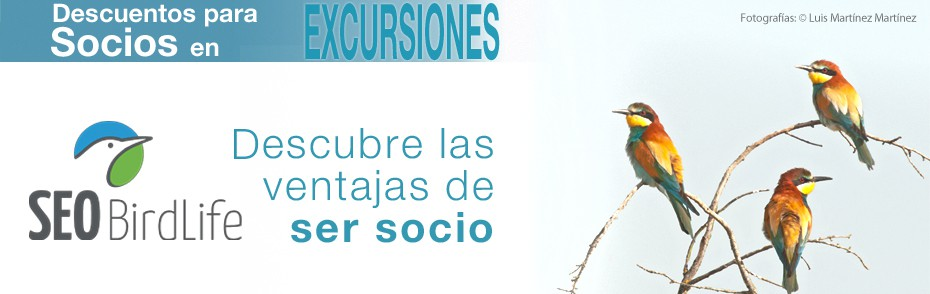 banner excursiones web seo1