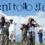 TO-birdwatching_x600