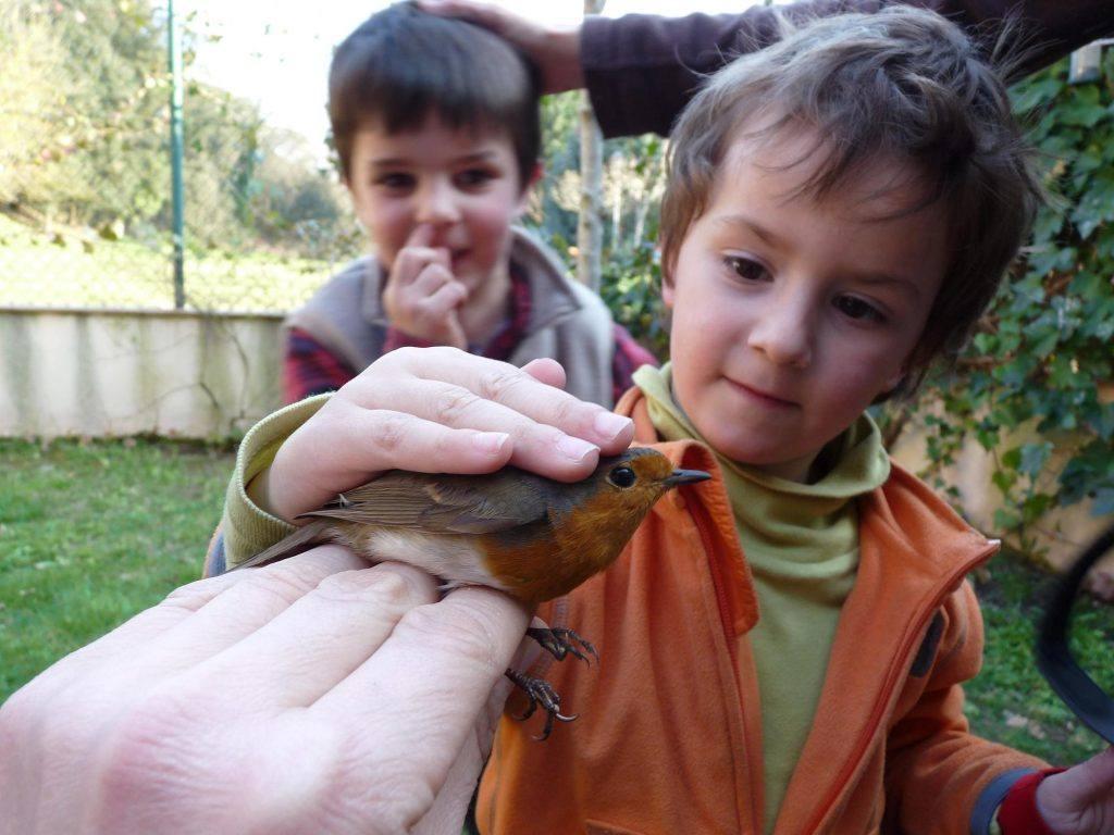 Taller de anillamiento para niños de SEO/BirdLife © J. M. Arcos-SEO/BirdLife