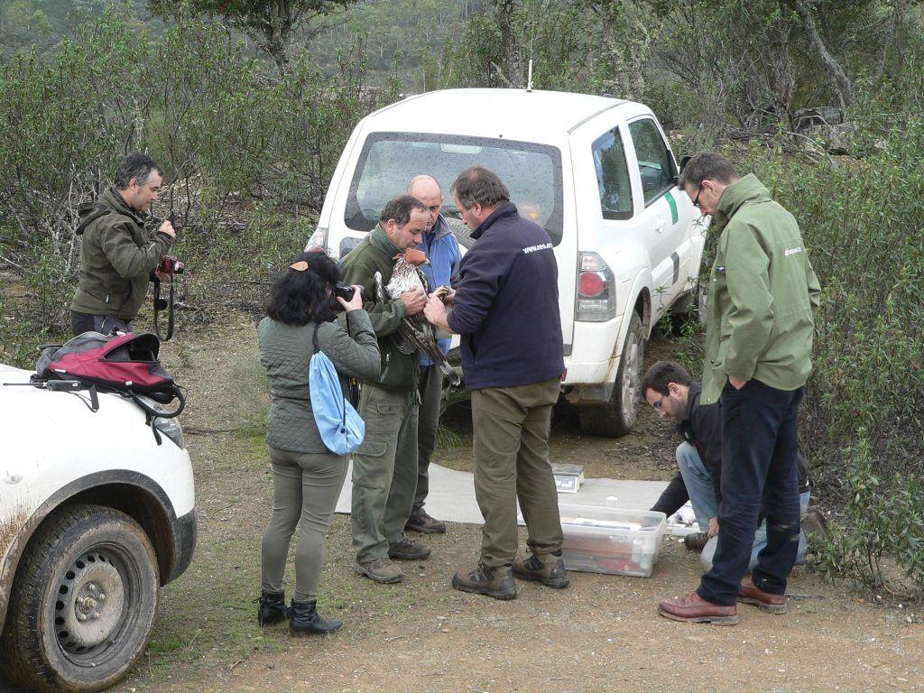 Equipo técnico en el momento del marcaje de Carmen ©SEO/BirdLife