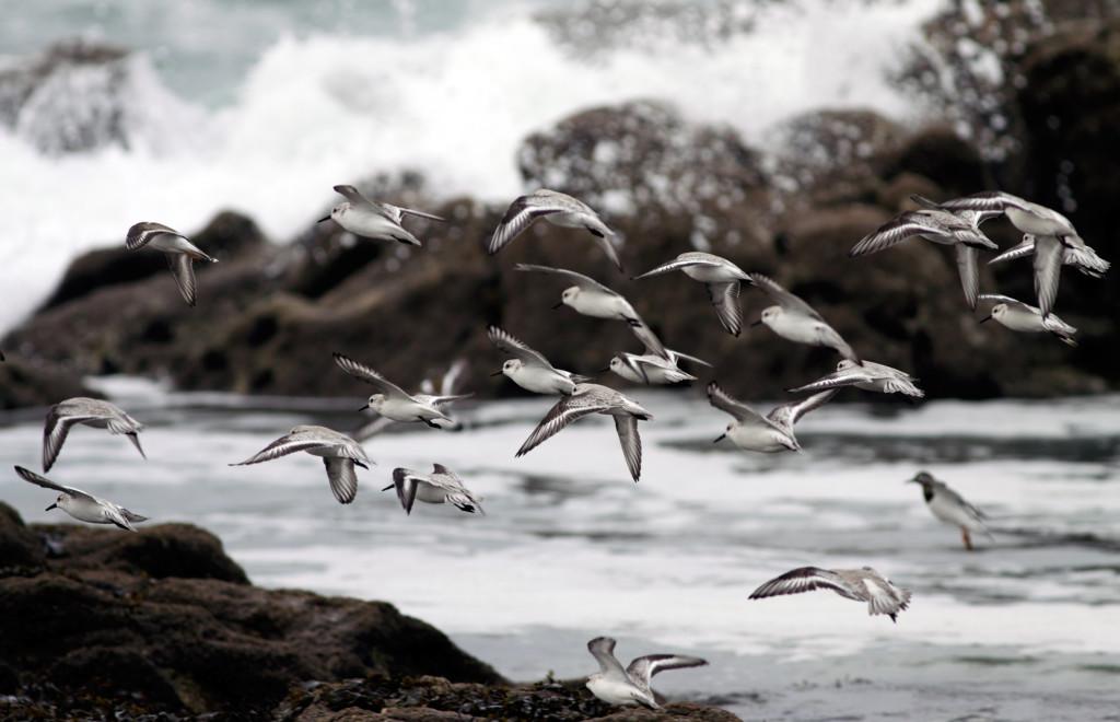 Bando fotografiado al norte de la Península Ibérica. ©Shutterstock
