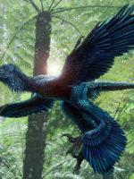 Recreación de un dinosaurio con flumas y alas basado en registros fósiles ©Science