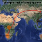beijing-swift