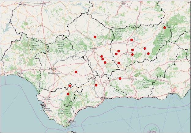 Mapa de los olivares en donde se desarrollan las labores de mejora de biodiversidad y voluntariado de Olivares Vivos