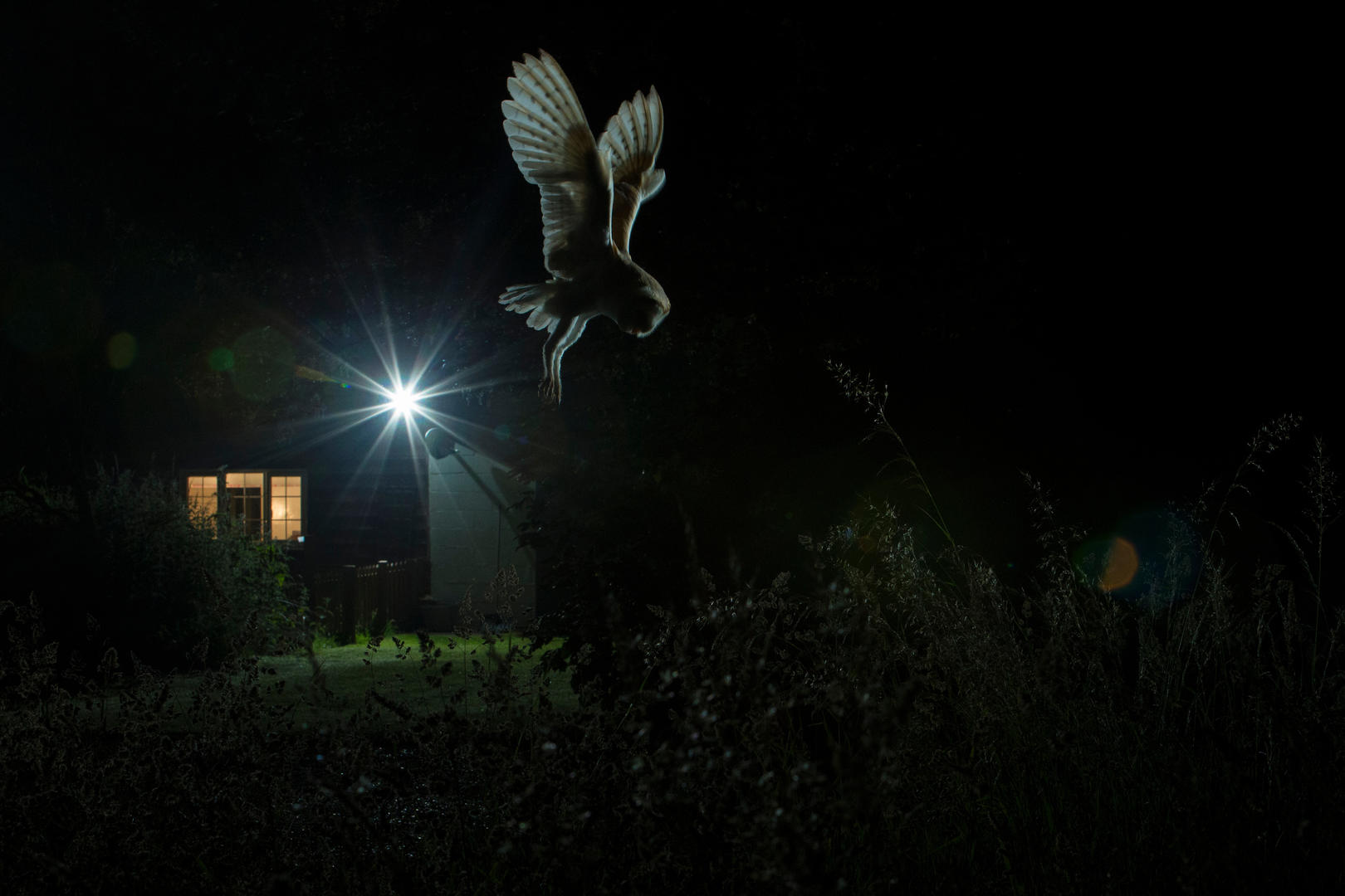 Hovering Barn Owl ©Jamie Hall