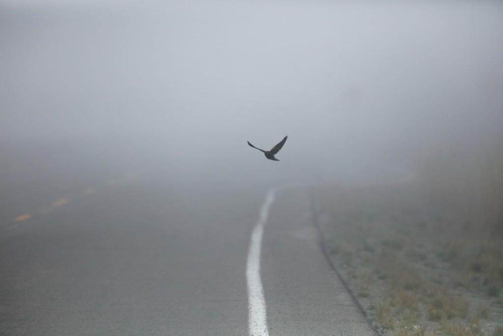 Integrar la conservación de la biodiversidad en el diseño de infraestructuras es  garantía de seguridad vial. ©Patrick Hendry