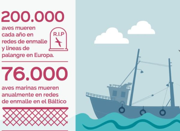 Captura bycatch