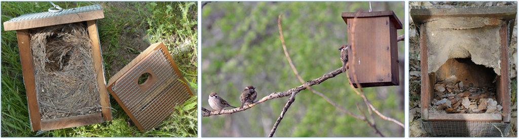 nidos-gorrion-trepador
