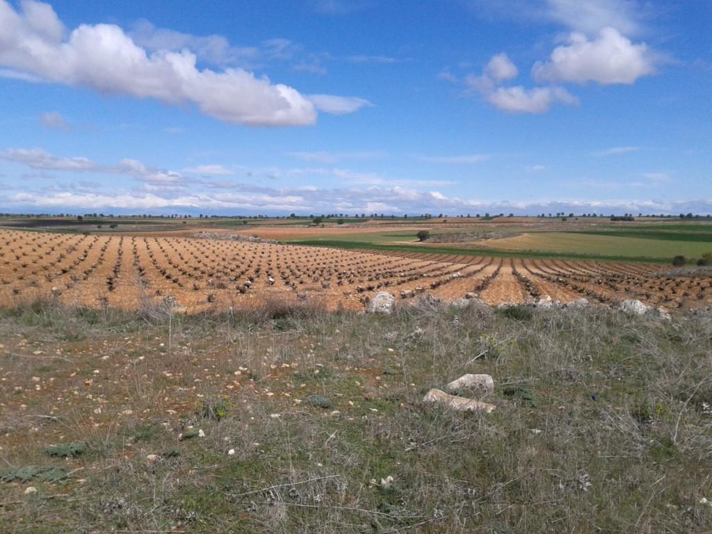 Zona donde se ha realizado el estudio, Campo Real (Comunidad de Madrid) Autor: Manuel Morales