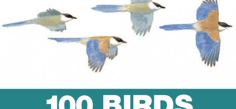 100 birds, 100 reasons to visit Spain